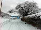 Winter in Dillingen (Pics made by P.Wagner)